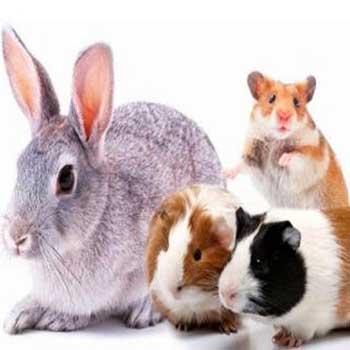 Animali non convenzionali ed esotici